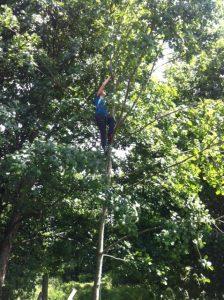 Treefelling 1